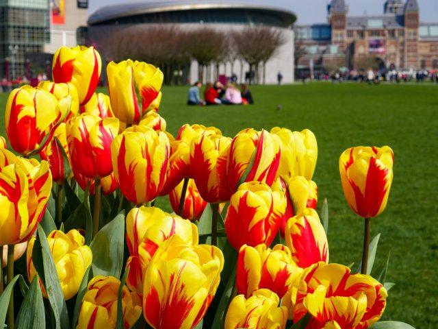 Amsterdam Tulip Festival 2019 and More!